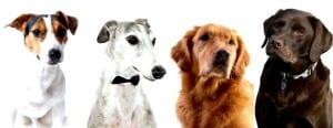 Jeden Tag Silvester Hunde1